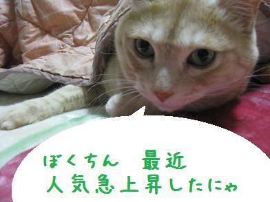 モカちゃん、人気急上昇_b0151748_12285646.jpg