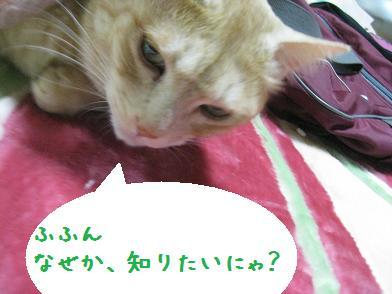 モカちゃん、人気急上昇_b0151748_12293997.jpg