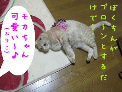 モカちゃん、人気急上昇_b0151748_12361114.jpg