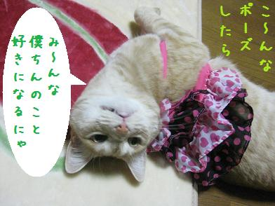 モカちゃん、人気急上昇_b0151748_12362531.jpg
