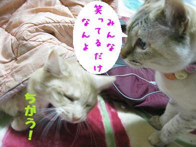 モカちゃん、人気急上昇_b0151748_12363851.jpg
