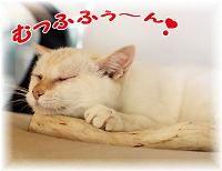 モカちゃん、人気急上昇_b0151748_1511253.jpg