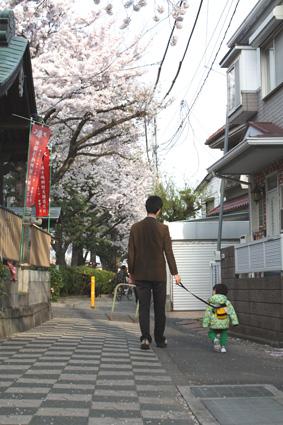桜咲く_d0163448_272041.jpg