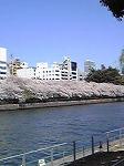 桜が満開ですね~☆_d0118053_1472916.jpg