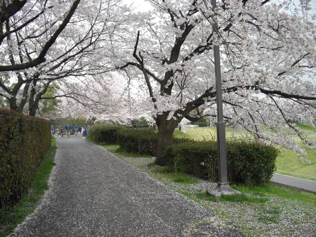 もう一度桜を見に行きました~_d0116059_12183191.jpg
