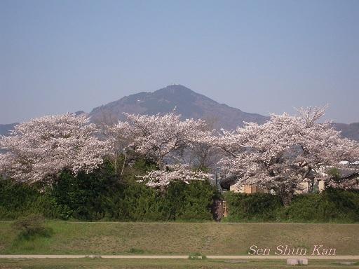 賀茂川の桜  2011年4月_a0164068_22251872.jpg