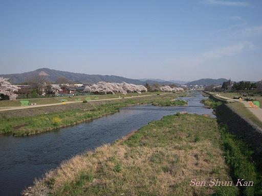 賀茂川の桜  2011年4月_a0164068_22255452.jpg