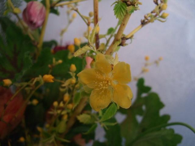 オークリーフ花の教室(春の花木を使って)_f0049672_18185597.jpg