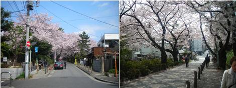 青山墓地の桜はとても綺麗である_d0183174_19354137.jpg