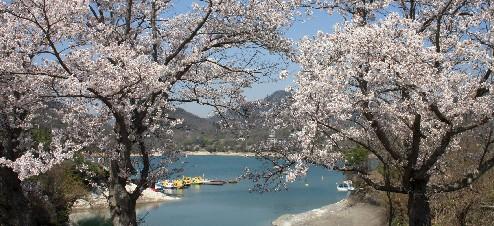 東条湖、春爛漫の週末 (兵庫)_b0067283_17191084.jpg