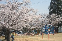 夫婦桜、樹齢100年寄り添って♪ (兵庫)_b0067283_17305165.jpg