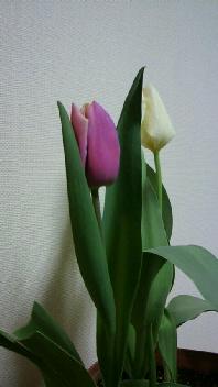 春ですね♪_b0134285_23475842.jpg