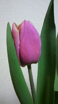 春ですね♪_b0134285_23485211.jpg