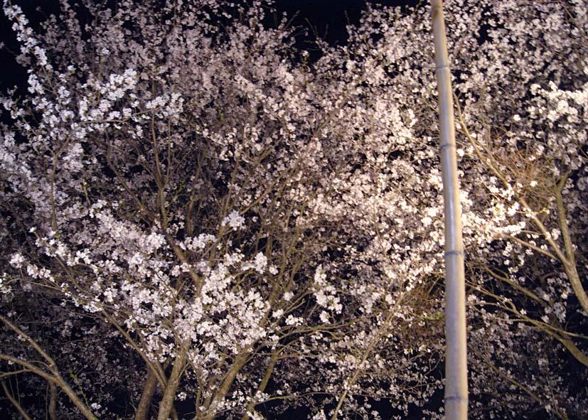 宵を染める薄墨_a0102098_7484085.jpg
