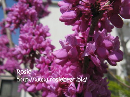 b0032098_1062484.jpg