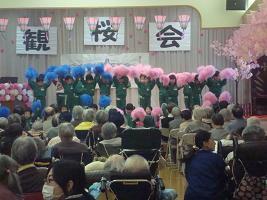 観桜会_c0212598_13253921.jpg