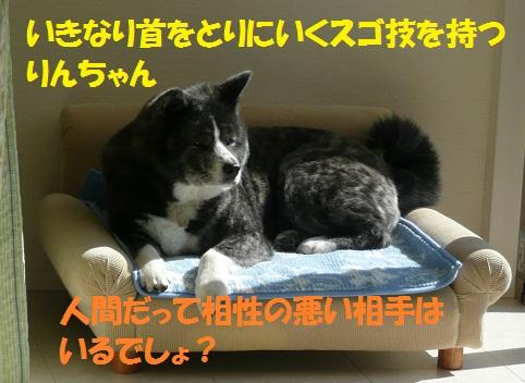 f0121712_6163494.jpg