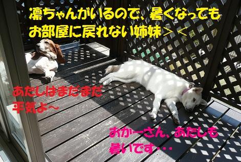 f0121712_728618.jpg