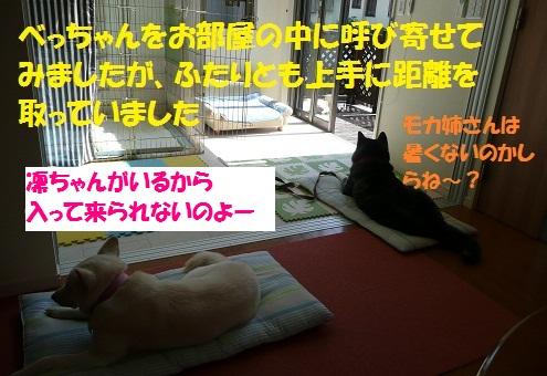f0121712_7463457.jpg