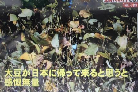 メーテレUP!で豆腐100万丁支援放送_d0063218_1561532.jpg