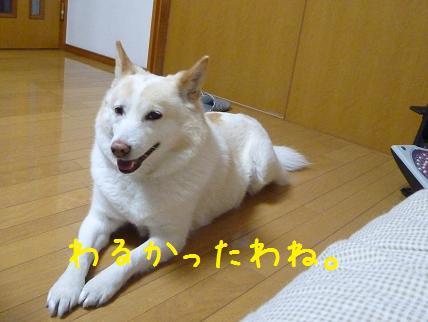 b0138430_2014558.jpg