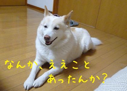 b0138430_2061541.jpg