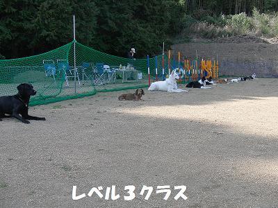 f0186040_0393465.jpg