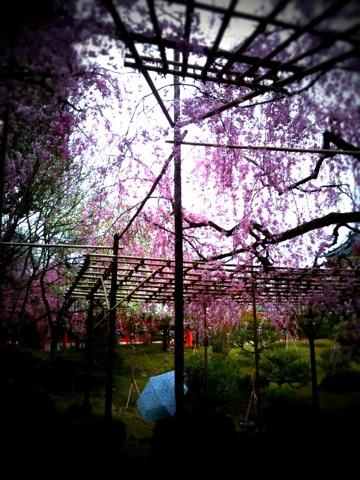 桜咲く京都へ ~後編 ~_a0060141_13565991.jpg