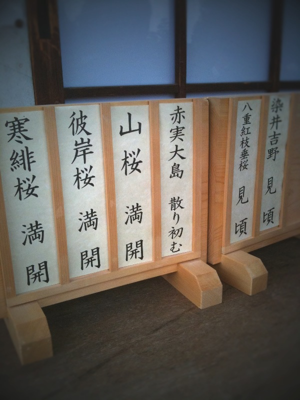 桜咲く京都へ ~後編 ~_a0060141_13581745.jpg