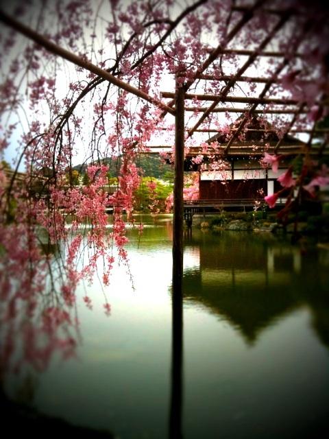 桜咲く京都へ ~後編 ~_a0060141_13585844.jpg