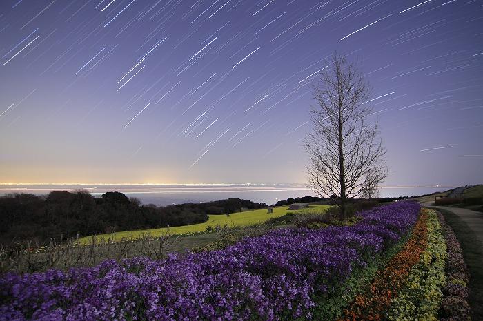 ここは美しき花の島・・・_b0168041_20431100.jpg