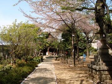 今朝の鳩の森神社_b0132442_1623127.jpg