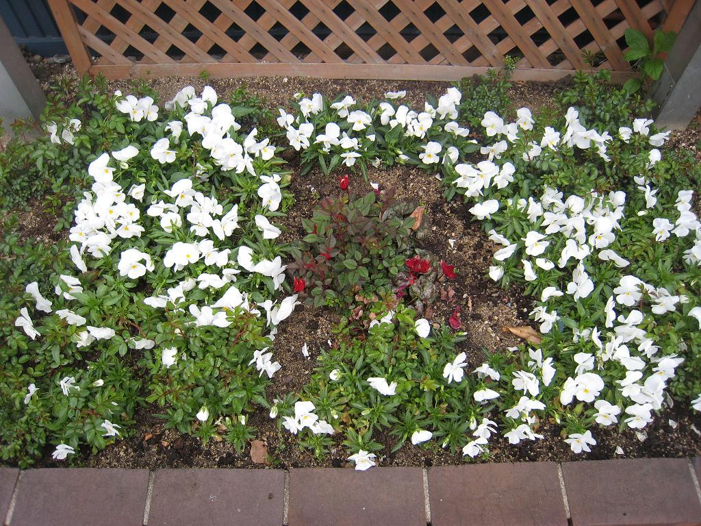 日の丸花壇_f0205367_197330.jpg