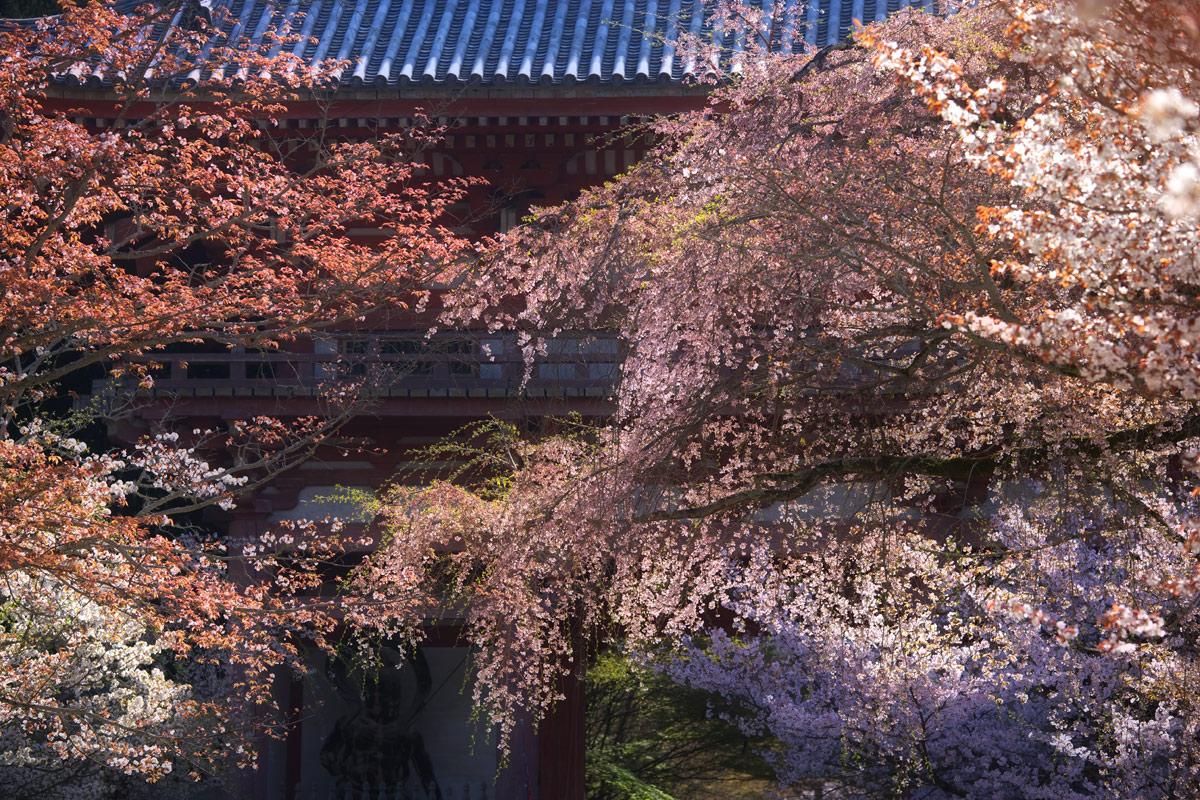 桜 2011 京都 <醍醐寺>_f0021869_22383375.jpg
