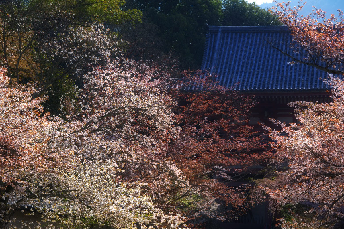桜 2011 京都 <醍醐寺>_f0021869_22384855.jpg