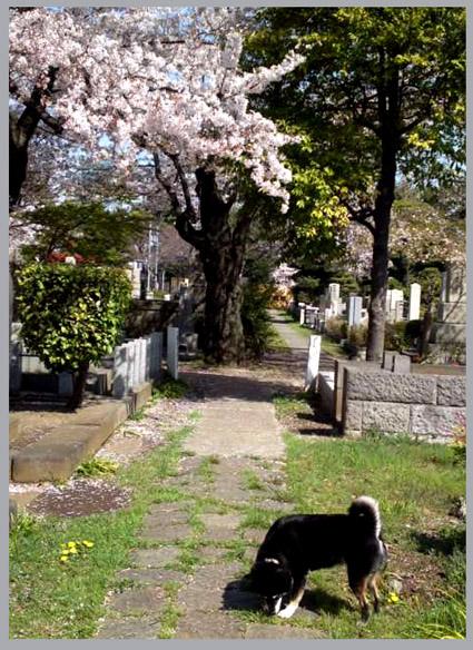 桜見納め。春うらら。_e0236072_1461858.jpg