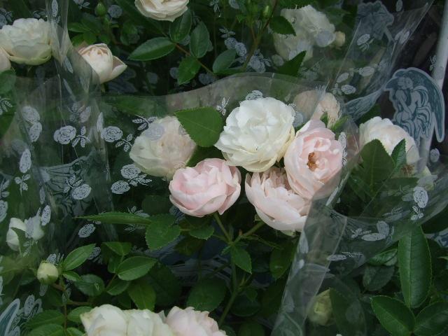 オークリーフ(初夏の花へと・・)_f0049672_15421772.jpg