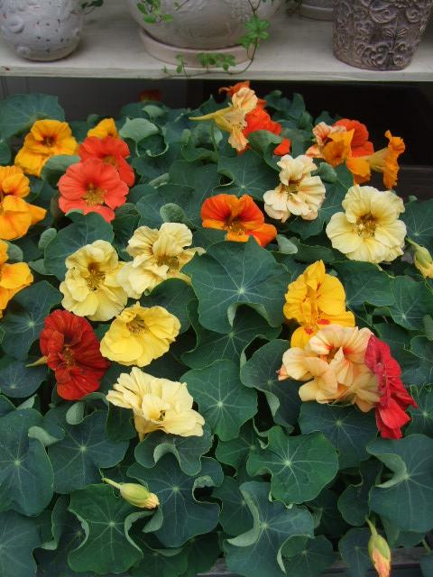 オークリーフ(初夏の花へと・・)_f0049672_15422664.jpg