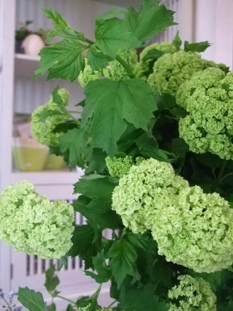 オークリーフ(初夏の花へと・・)_f0049672_15573155.jpg