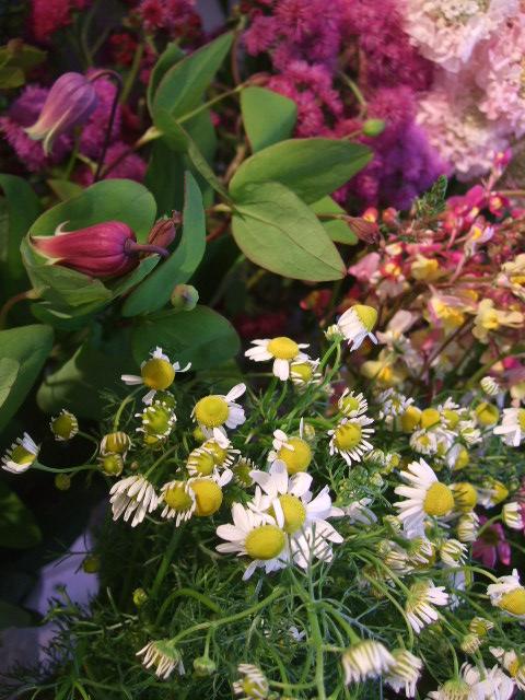 オークリーフ(初夏の花へと・・)_f0049672_1559406.jpg