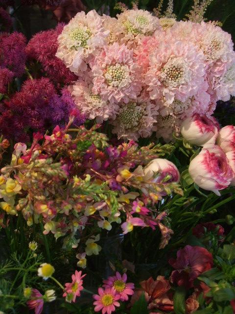 オークリーフ(初夏の花へと・・)_f0049672_15594650.jpg