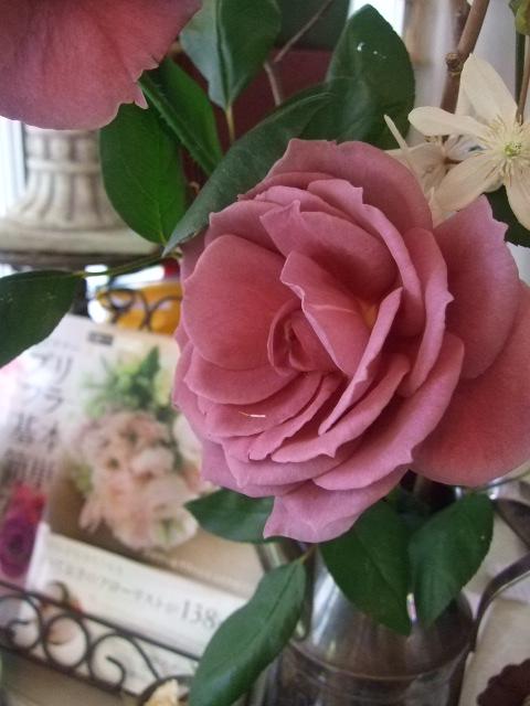 オークリーフ(初夏の花へと・・)_f0049672_16241652.jpg