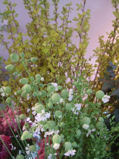 オークリーフ(初夏の花へと・・)_f0049672_1665898.jpg
