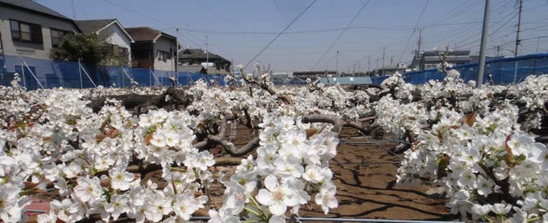 東日本大震災への小平市の対応について_f0059673_23123100.jpg