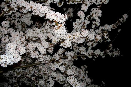 花よりも お団子よりも 寒かった ・・・_a0133078_9393347.jpg