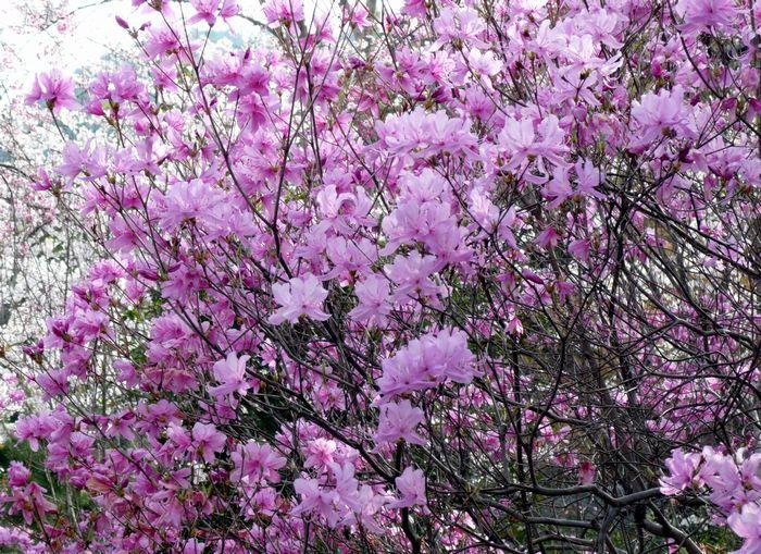 京都見物 4_b0093088_705023.jpg