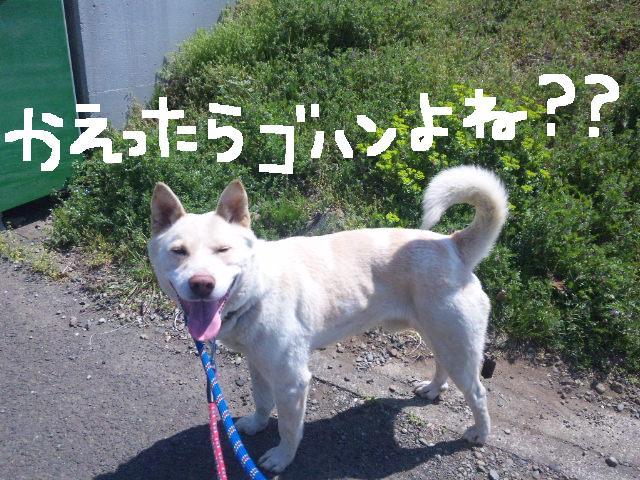 うれしい報告です★UKC JAPANボランティアの近況★_d0187891_21513459.jpg