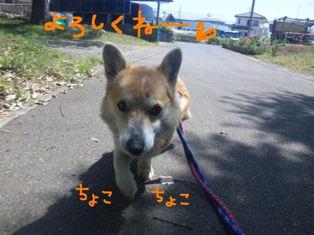 うれしい報告です★UKC JAPANボランティアの近況★_d0187891_21514248.jpg