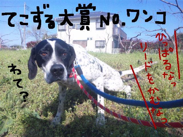 うれしい報告です★UKC JAPANボランティアの近況★_d0187891_21521426.jpg