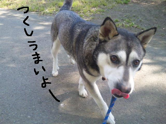 うれしい報告です★UKC JAPANボランティアの近況★_d0187891_2152628.jpg